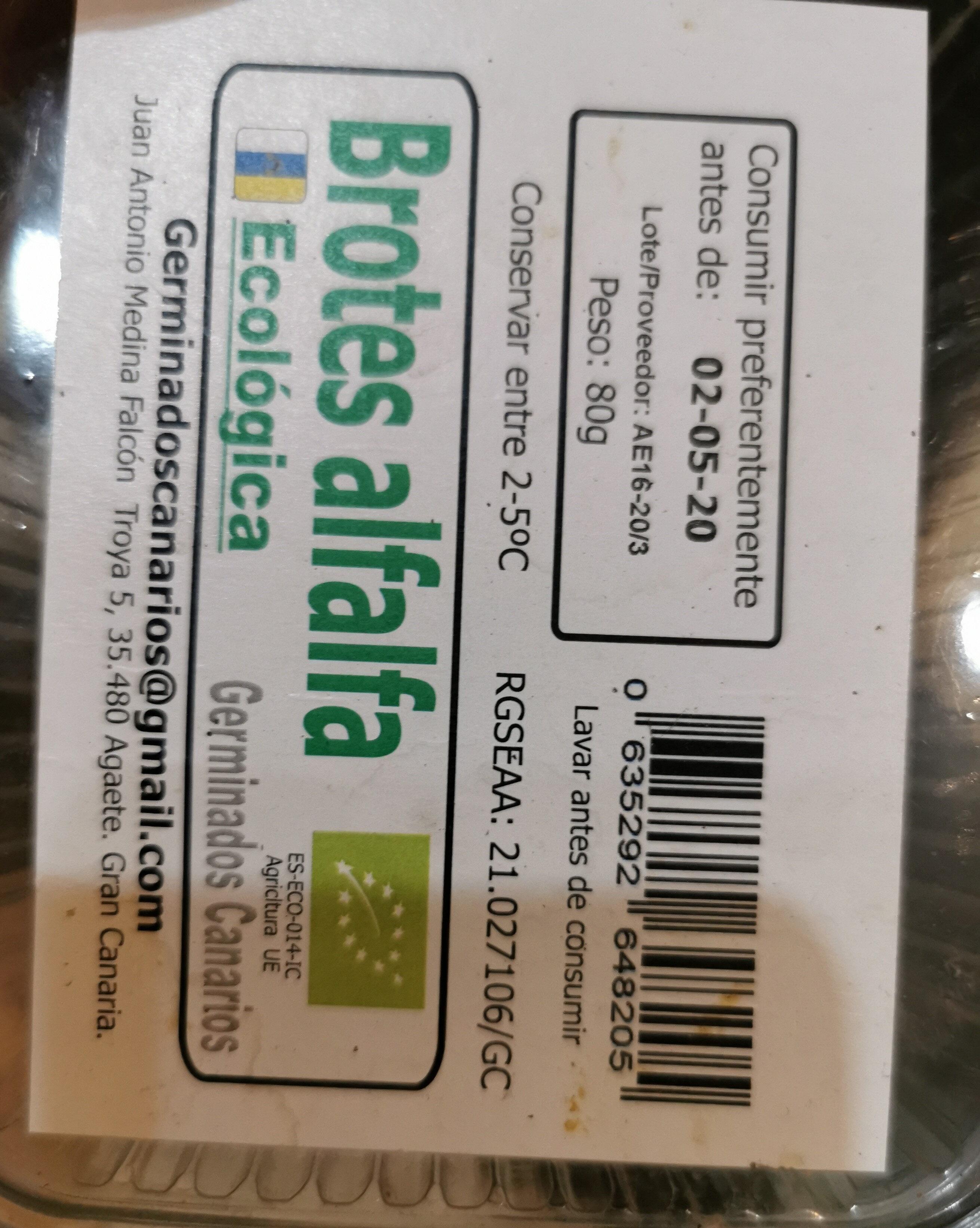 Brotes de alfalfa - Producte - es