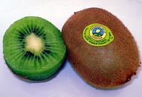 Kiwi - Product - fr