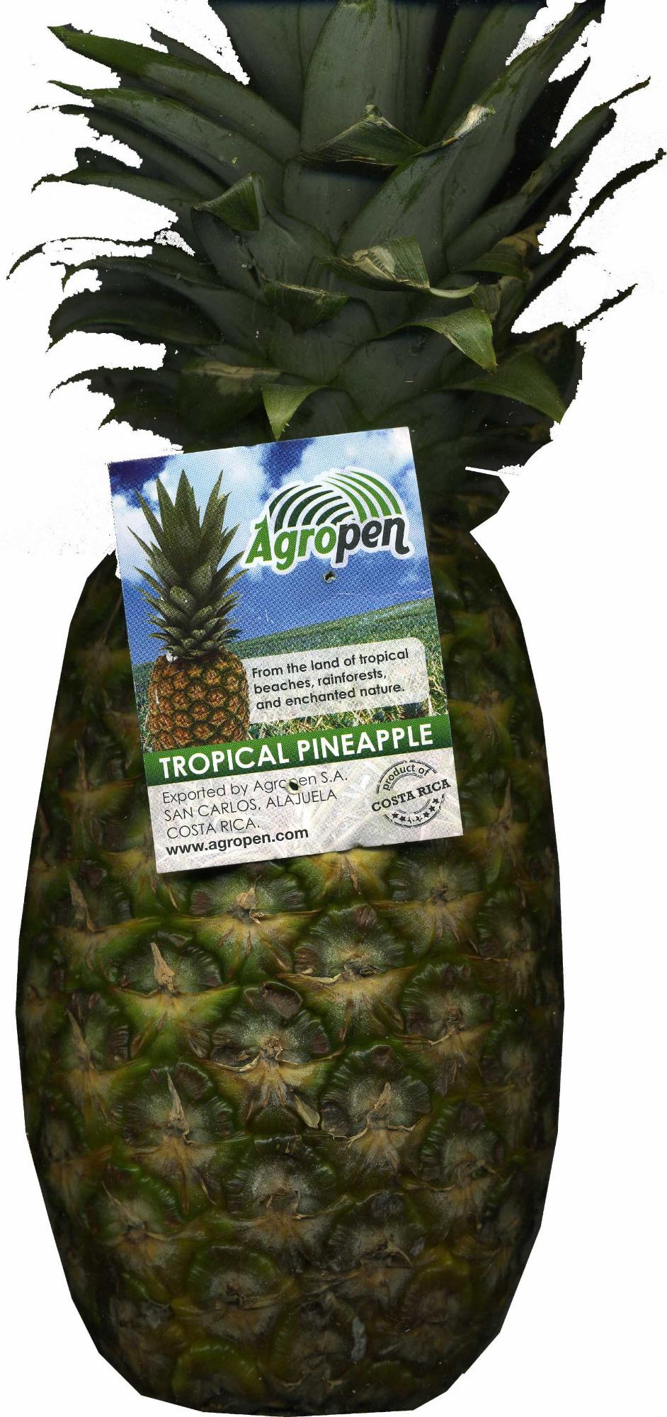 """Piña """"Agropen"""" - Producto"""