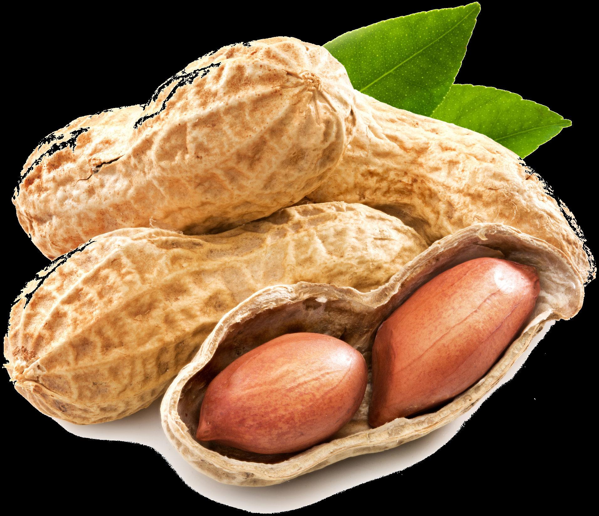 Beurre de cacahuète Fedibio - Product - fr