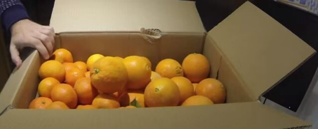 Oranges Biologiques (Naveline) - Product