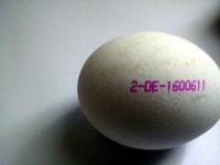 Frische Eier aus Bodenhaltung - Ingredients - de