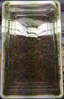 Lentilles au vinaigre de Xérès - Product