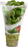 Basilic en pot - Instruction de recyclage et/ou informations d'emballage - fr
