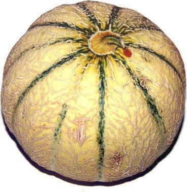 Melon - Product