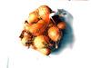 Oignon Jaune - Product