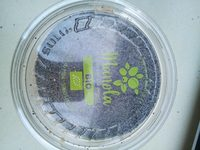 Graines de pavot bleu - Product - fr