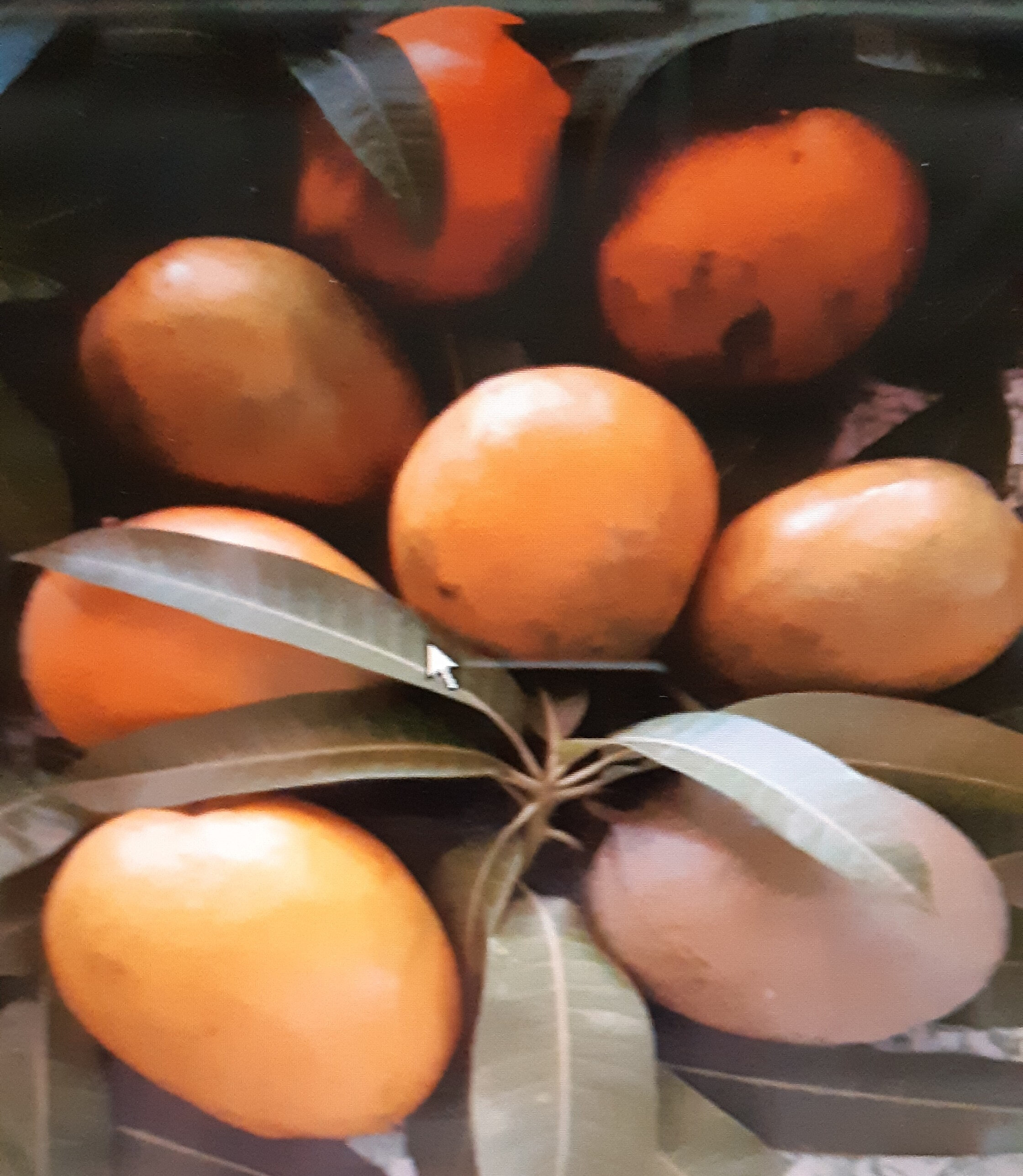 confiture de mangue du Burkina Faso - Product