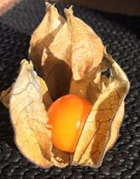 Physalis, Amour en cage - Nutrition facts - fr