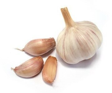 Knoblauch - Product