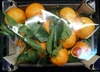 Clementines - Product