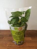 Basilicum - Product