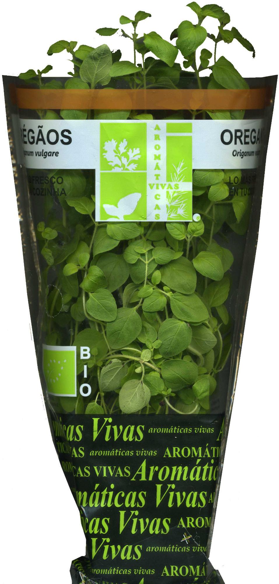 Planta de orégãos - Producte - es
