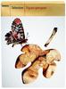 Figues grecques - Product