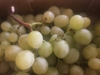 Raisins verts - Product - fr