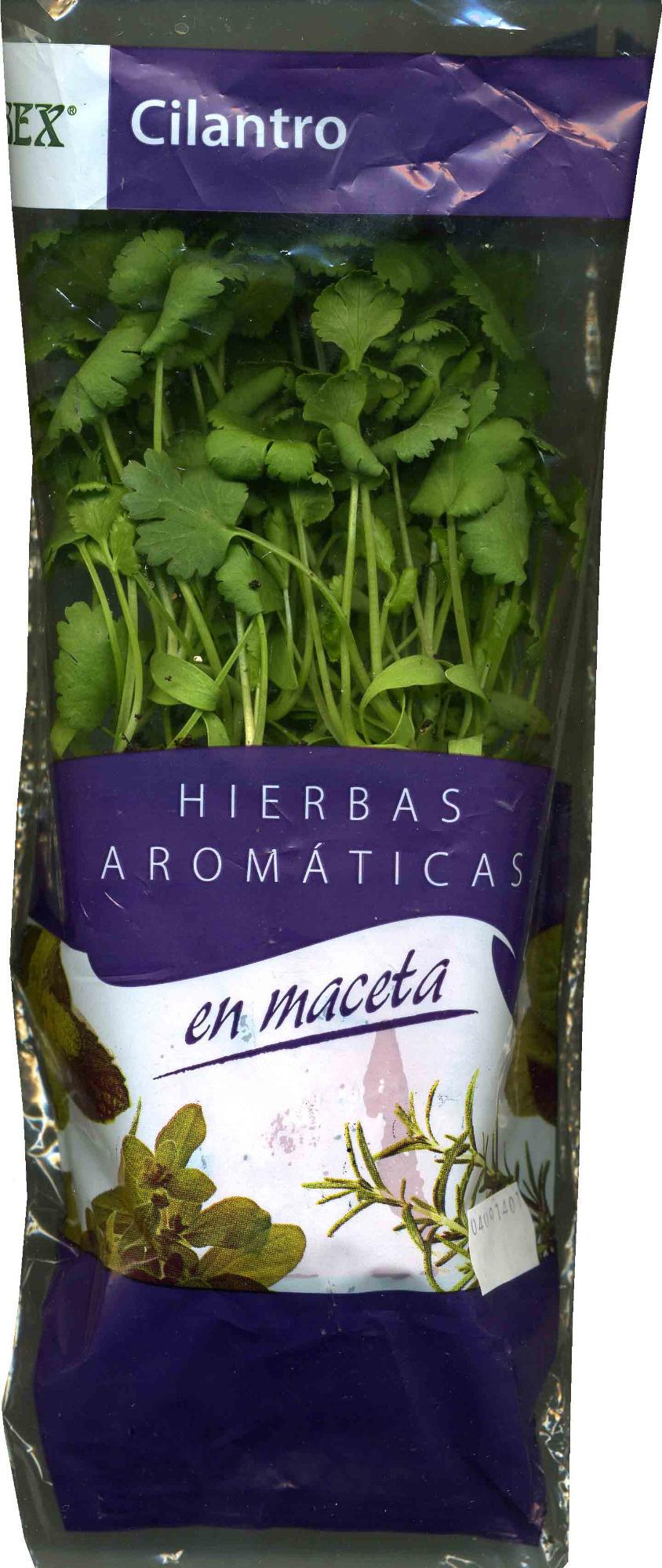 Maceta de cilantro - Producto