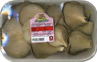 "Setas de ostra ""Angelita"" - Product"