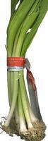 """Ajos tiernos """"Viper"""" (Allium porrum) - Producto"""