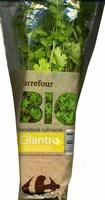 Maceta de cilantro - Product