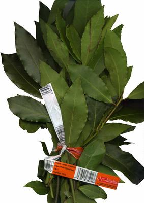 Hojas de laurel frescas - Producte