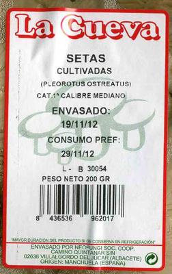 Setas pleorotus - Ingrediënten