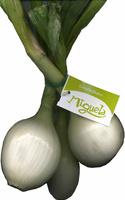 Cebolletas tiernas blancas - Producto