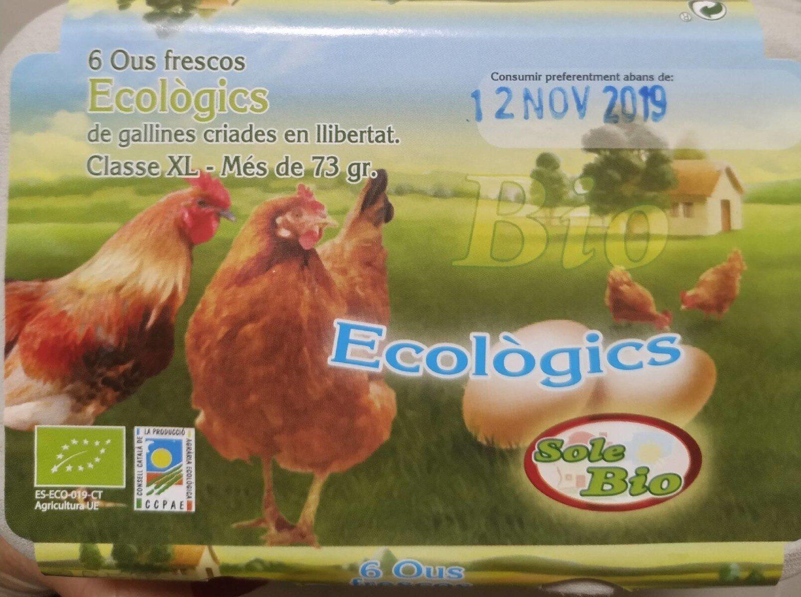 Huevos ecológicos clase xl - Nutrition facts - fr