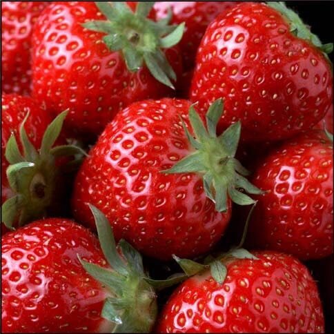 Aardbeien - Product - en