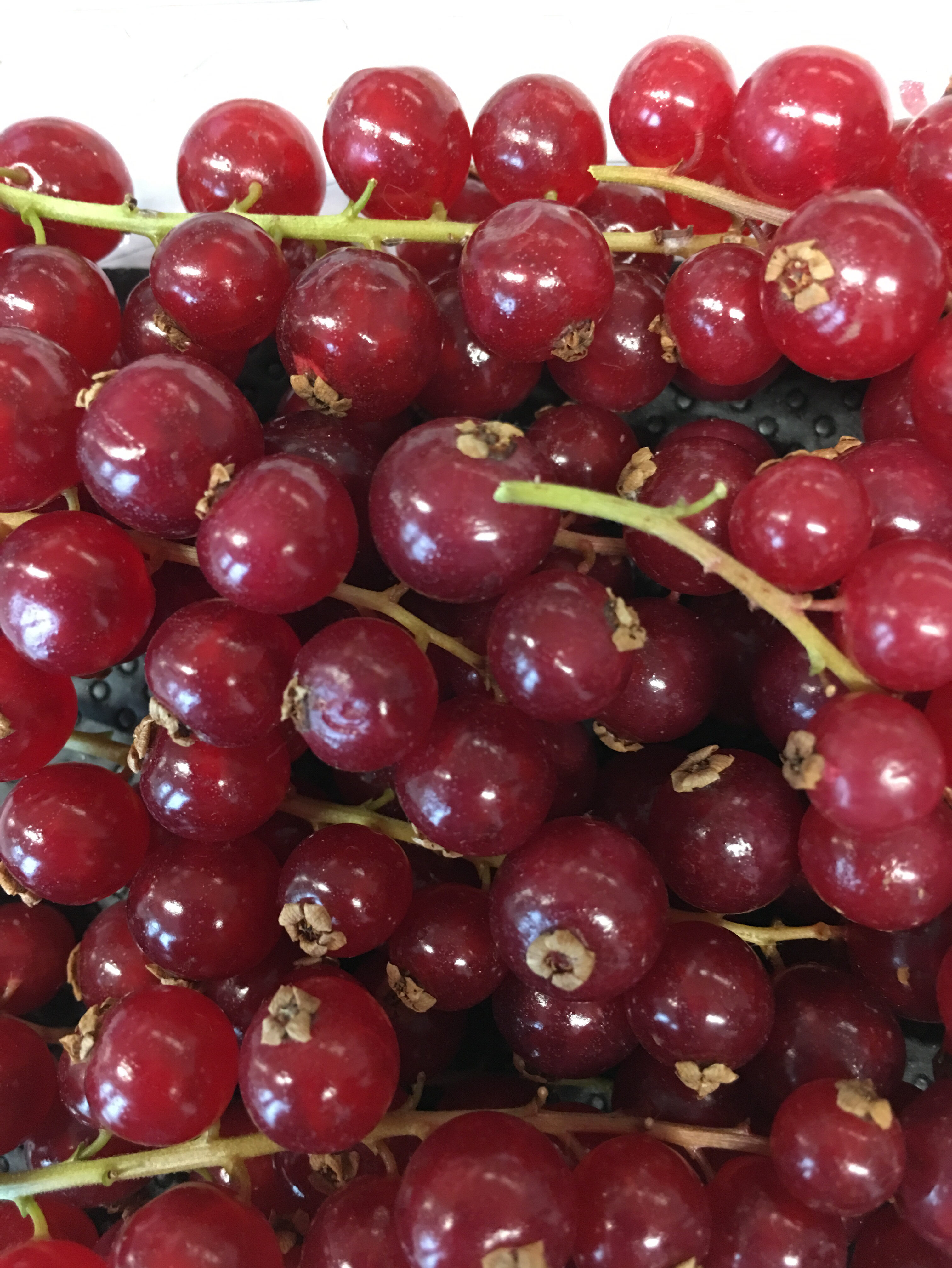 Groseilles rouges - Ingrediënten